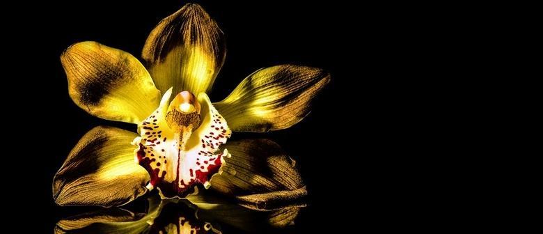Orchid Auction