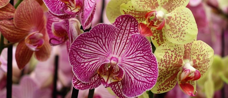 Tauranga Orchid Show